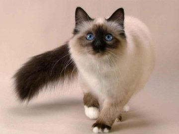 Ways to Train your Cat Smarter