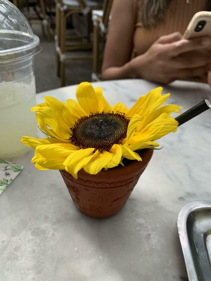 Cocktail In A Garden Pot